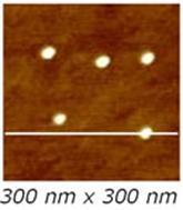 AZoNano – Online Journal of Nanotechnology - 300 x 300 nm2 TM-AFM image of the Sample 1 .