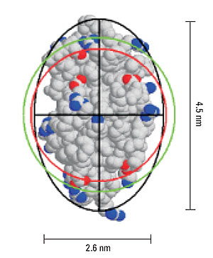Representation of lysozyme, showing the geometric axial dimensions, the hard sphere diameter (red), hydrodynamic diameter (green), and an ellipsoid with the same diffusional properties as the protein (black).