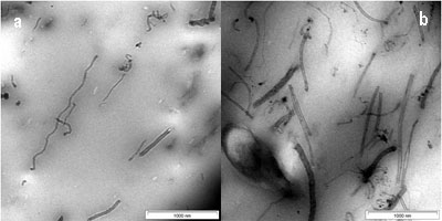 TEM image of CNTs in SMR CV60 (a) 1 wt % of CNTs (b) 3 wt % of CNTs (c) 5 wt % of CNTs (d) 7 wt % of CNTs and (e) 10 wt % of CNTs.